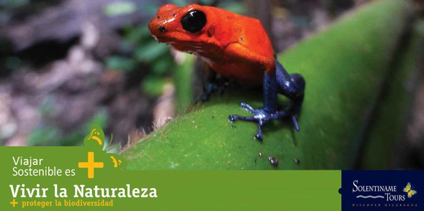 Nicaragua con Nuevo Premio Internacional